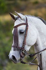 Horse  Horse riding  Sierra de Gredos  Avila  Castilla y León  Spain  Europe