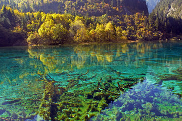 Five flower Lake  Jiuzhaigou Nature Reserve  Jiuzhaigou valley  Sichuan  China