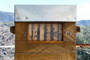 Warré hive. observation window. Apiary Porte Rouge. Levens. Alpes-Maritimes. France