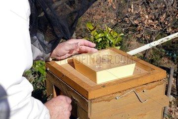 Warré hive. Feeding . Apiary Porte Rouge. Levens. Alpes-Maritimes. France
