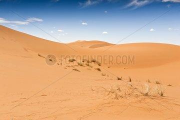 Sand Dune - Morocco