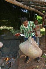 Pesée avant la distillation de l'Ylang-ylang à Mayotte