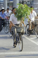 Transportation plant in bicycle Beijing China
