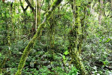 Undergrowth of the Bwindi Impenetrable Forest - Uganda