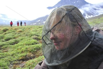 Denmark. Greenland. Disko island. Visitor with a mosquitoes nest during a trek.