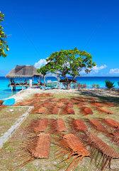 Weave coconut leaves - Fakarava French Polynesia