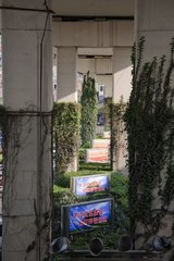Vegetation climbing an urban road infrastrucrue  Shanghai  China 2007