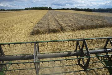 Wheat harvest in summer - GB