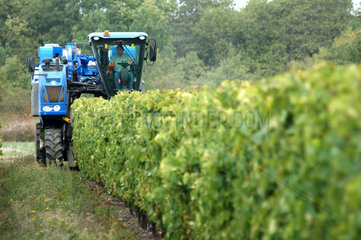 Mechanical harvest in the vineyards - Island Oleron France