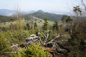 Forest destroyed by the 1999 storm - Vosges France
