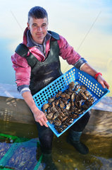 Oyster farmer and oysters of Marennes d'Oleron - France