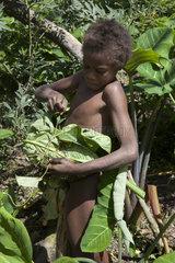 Boy carrying Taro roots - Tanna Vanuatu