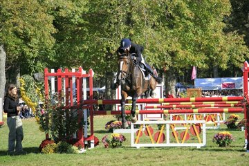 Jumping show at Mondial du Lion in France