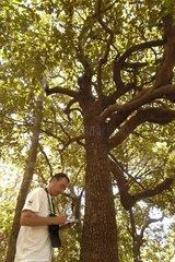 Scientifique sous un arbre Forêt sèche sur l'île de Ba' ba
