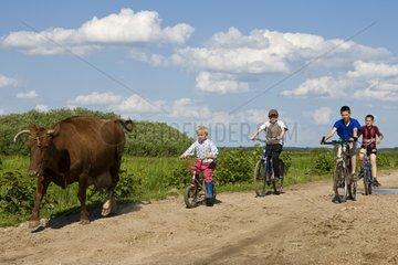 Children bringing a dairy cow Cycling Bierbrza Poland