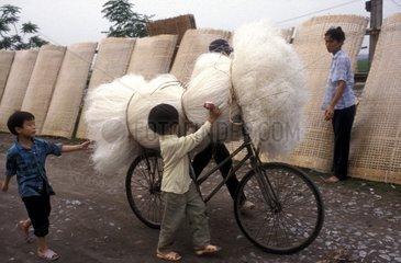 Transportation vermicelli bicycle Hanoi Vietnam