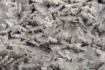 Ice sheet near a mountain stream   Queyras   Hautes-Alpes   France