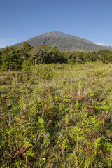Mount Rinjani - Gunung Rinjani NP Lombok Indonesia