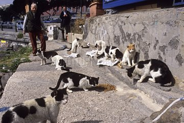 Cats eating food lodged by volunteers Naples Italy