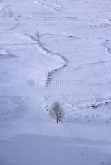 Lonely tree in a snowed field Auvergne France