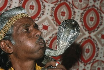 Snake charmer blowing on the head of his Cobra India