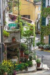 Little city garden on the street