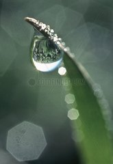 Drip of water on leaf of grass France
