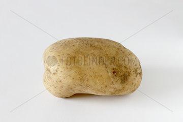Irish Potato 'Sapphire' on white background