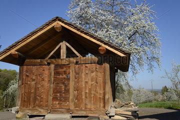 Chalot and Cherry blossoms - Franche-Comté France