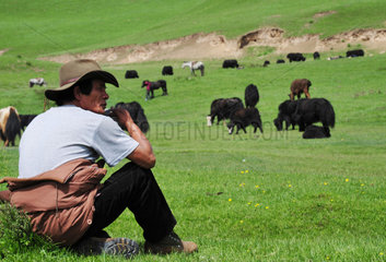Sheperd looking after his yaks - Tibet China