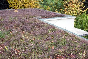 Perennials on a green roof substrate on France
