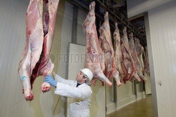 Vérification de carcasses de veaux