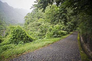 Paved road in tropical forest  Ponta Figo  Sao Tome and Principe Island
