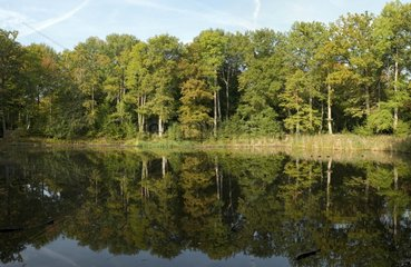 Evées pond in autumn in the forest of Fontainebleau