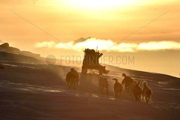 Inuit hunter at sunrise  Greenland  February 2016