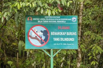 Sign against Cockatoo poaching - Manusela Maluku Indonesia