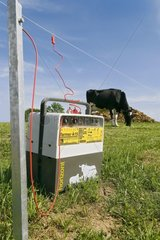 Cow and Electric fence with earthing of the park France