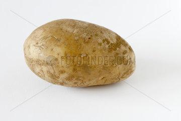 Irish Potato 'Bintje' on white background