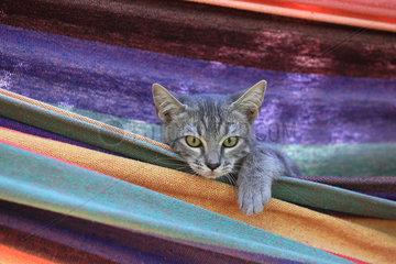 Kitten in a colorful hammock