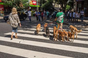 Dog Walker - Buenos Aires Argentina