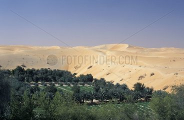 Farm and Palm trees in the desert United Arab Emirates