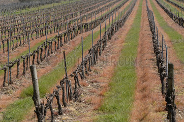Herbicidal treatment in vines  St Alban Auriolle  Ardeche  France