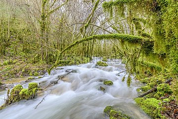 Stream of Armaille   supplied with water after rainstorms and moss covered trees (Antitrichia curtipendula)  Bugey  Ain  France. This type of mossy forest is associated with shady valleys to the atmosphere very humid in all seasons