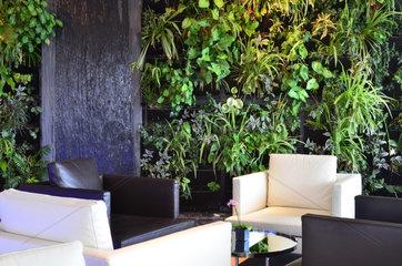 Green wall of a hotel bar - Ile d'Oleron France