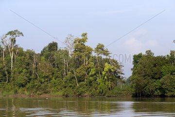 Kinabatangan river bank - Sabah Malaysia