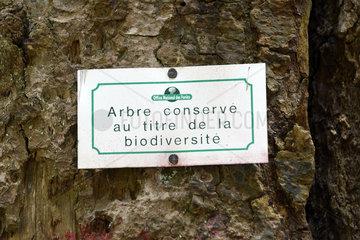 Fir kept under biodiversity - Vosges France