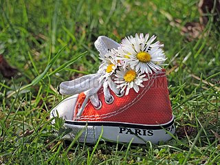 Lawndaisies inside a little shoe