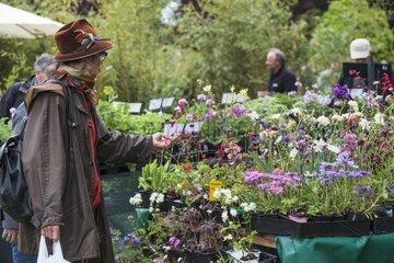 Shopping of perrenials plants in a garden show