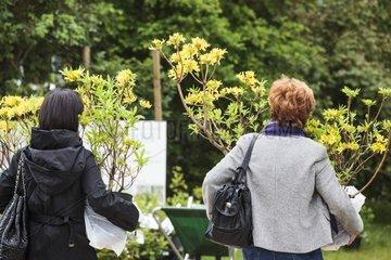Shopping of shrubs in a garden show
