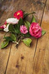 Bouquet of Camellias
